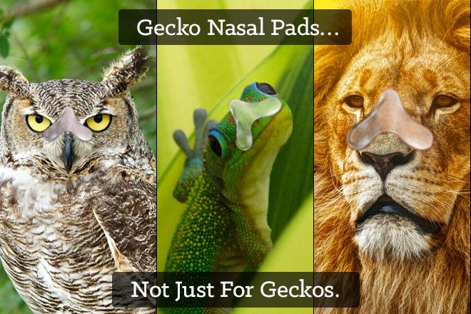 Gecko-Nasal-Pad