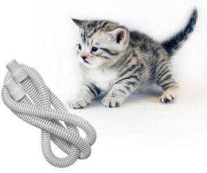 Christmas-Emails-600x500-Kitten-Tube