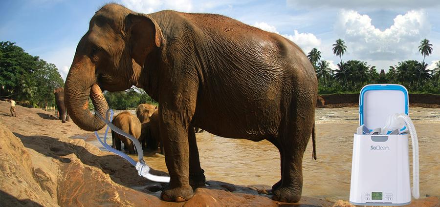 CPAP-Animals-Elephant